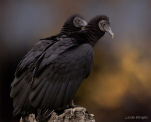 loyal Vultures  loyal animals list most faithful animal. Loyal Animals Which Animals Are Most Loyal most loyal animal in the world loyal pets