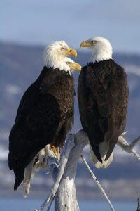 blad eagle egges loyal animals list most faithful animal. Loyal Animals Which Animals Are Most Loyal most loyal animal in the world loyal pets