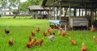 poultry farm near me
