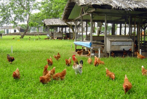 poultry farm near me