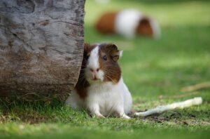 hamster1