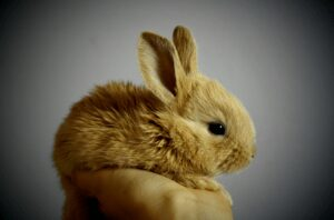 rabbit farm house