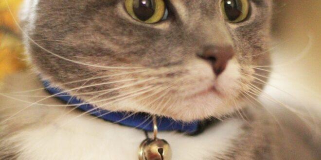 pancreatitis in cats