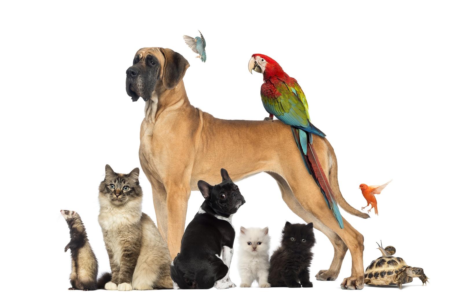pets care near
