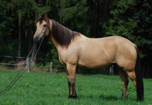 quarter horse speed