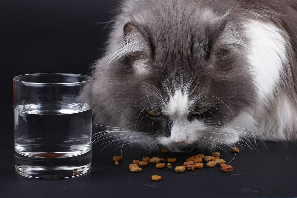 foods toxic to cats