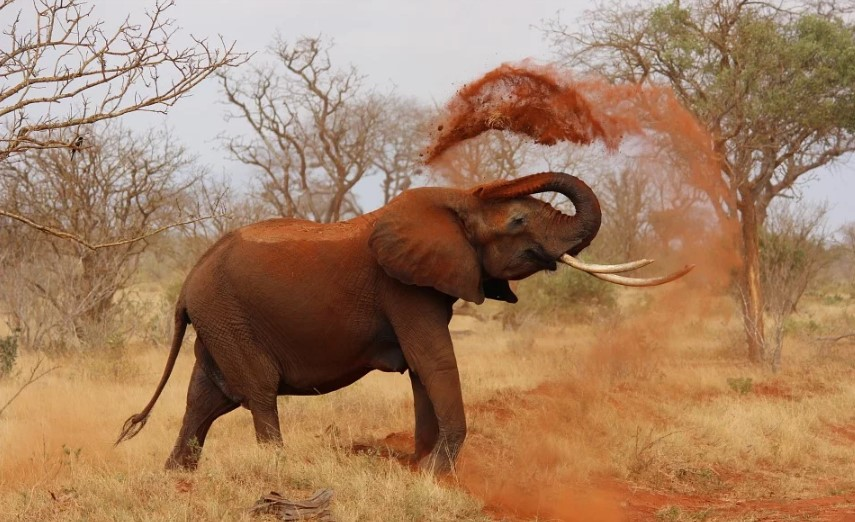 elephants groups