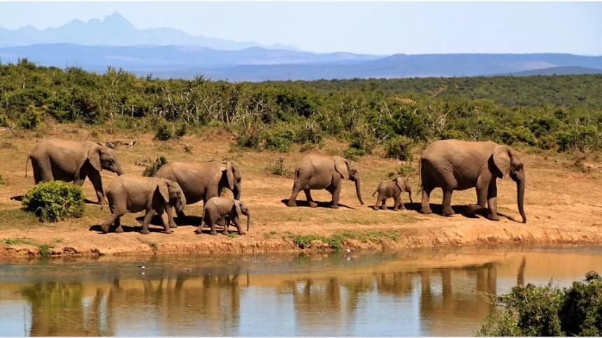 the bigest elephant