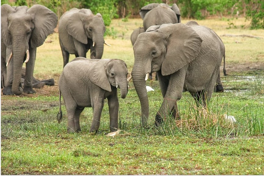 baby of elephant picture