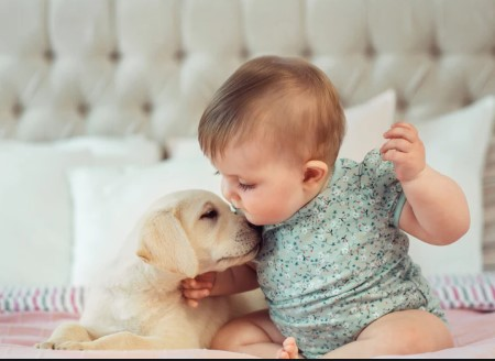 pets and babies