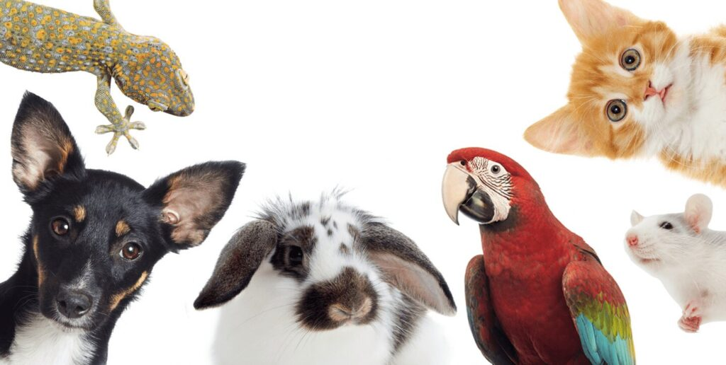 best pets for house