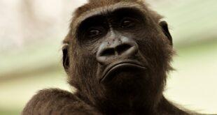 the monkeys life