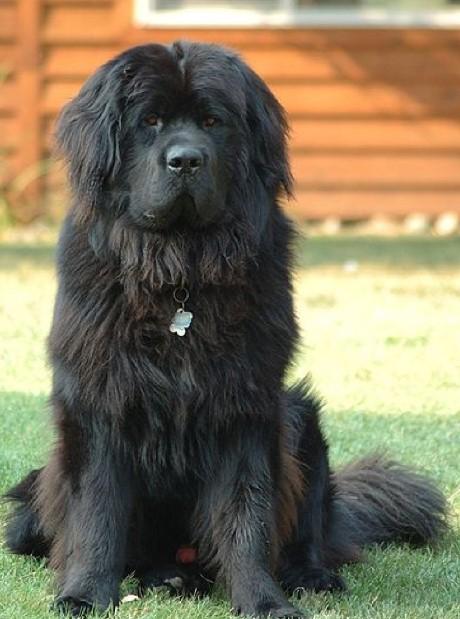 anubis hound egyptian greyhound tesem dog egyptian pharaoh dog anubis pharaoh hounds egyptian hairless dog egyptian hound egyptian pharaoh hound anubis dog egyptian dog breeds egyptian dog