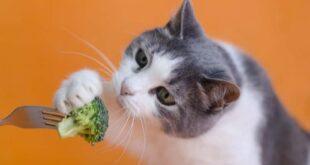 Vegetables Cats
