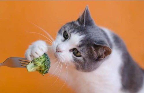 Vegetables Cats