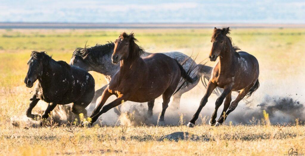 wild horses existence