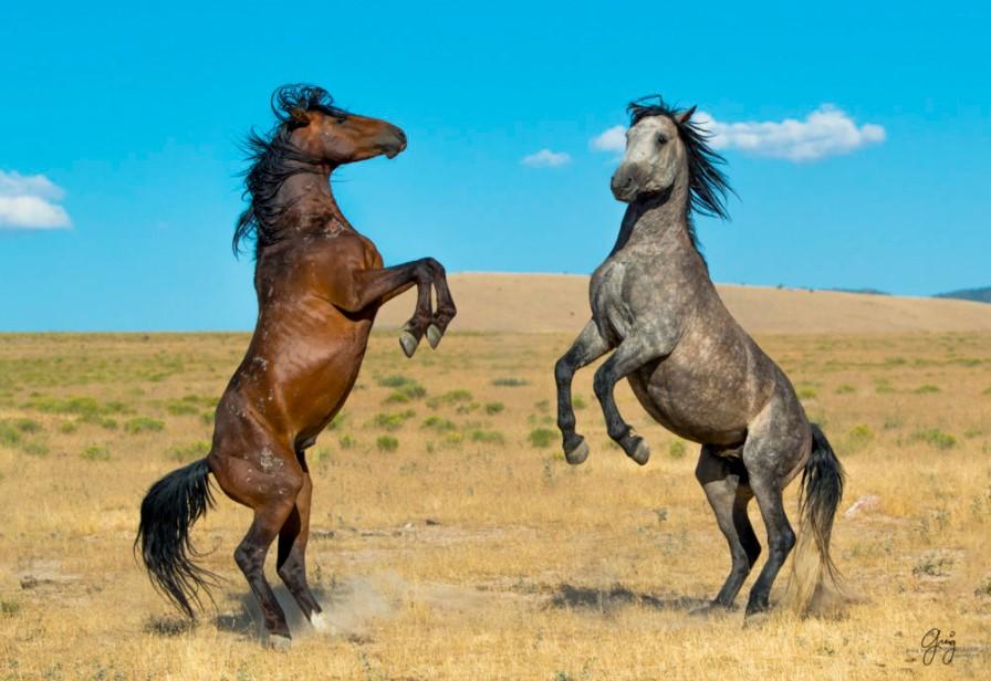 wild horses life