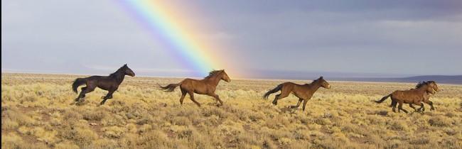 wild horses in usa