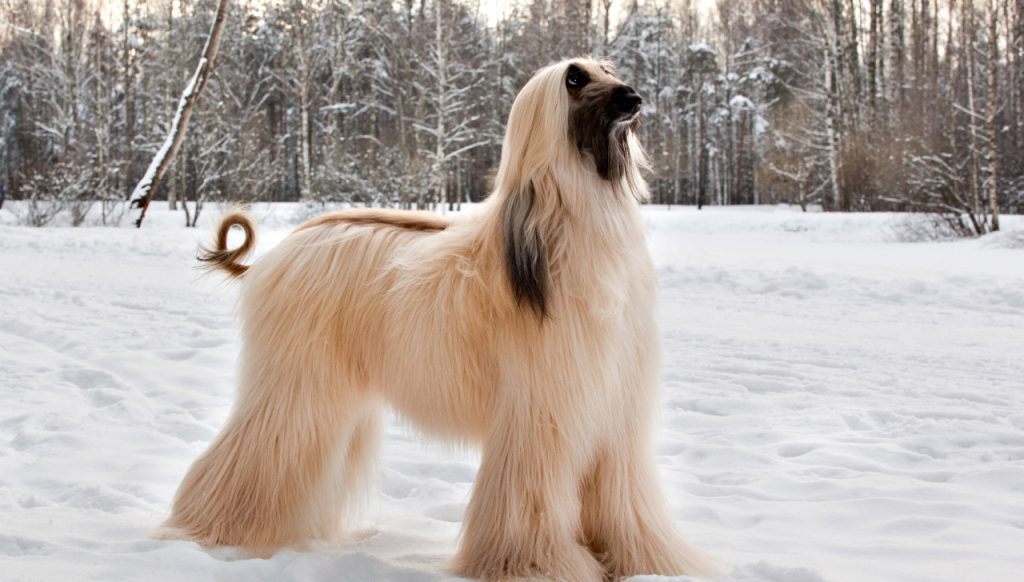 fastest dogs fastest dog breed dog speed Top 20 Fastest Dog Breeds fastest dog in the world fastest dog breeds fastest dog speed