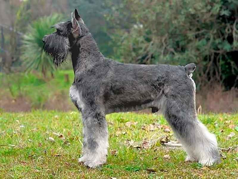 fastest dogs fastest dog breed dog speed fastest dog in the world fastest dog breeds fastest dog speed Top 20 Fastest Dog Breeds