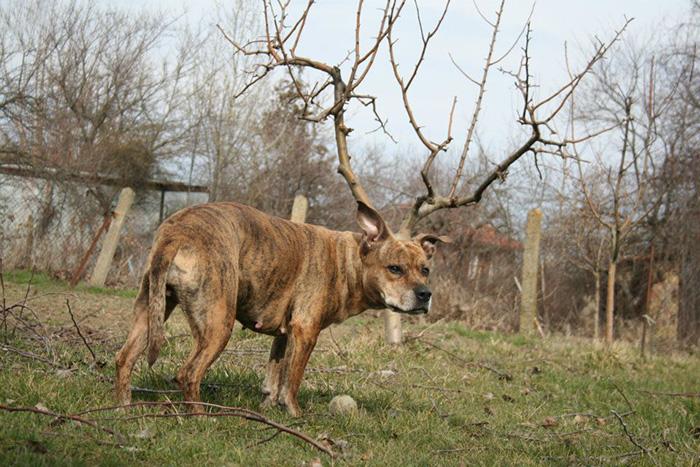 deer dog