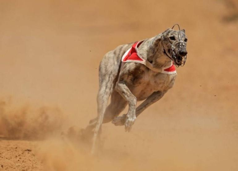 dog speed