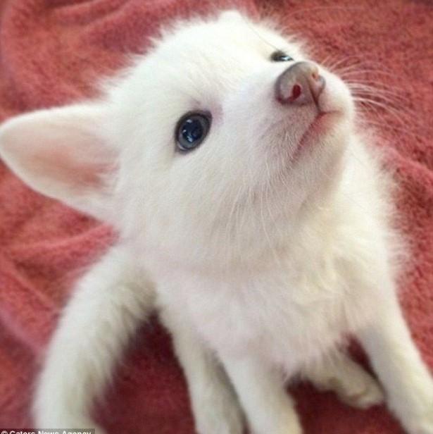 fox cat