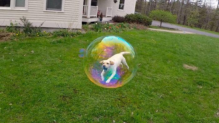 funny dog runing