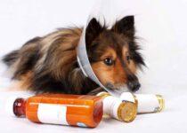 Anti-Inflammatory For Dog