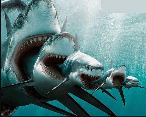 Extinct Sharks Species