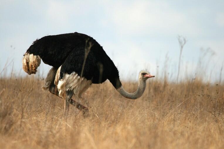 fastest running bird fastest bird on foot what is the fastest land bird fastest land bird which is the fastest running bird fast running bird how fast can an ostrich run