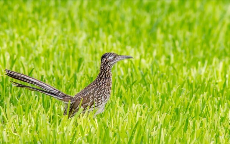 fastest running bird fastest bird on foot what is the fastest land bird fastest land bird which is the fastest running bird fast running bird
