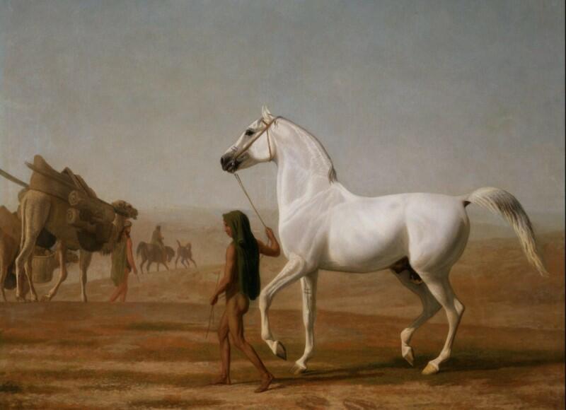 arabian horse history