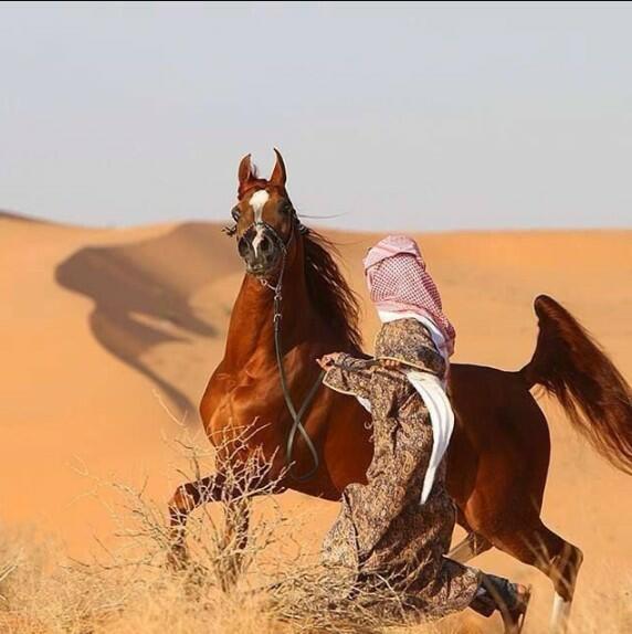 desert horse
