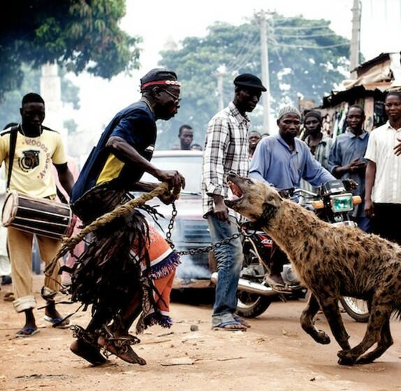 hyena pet in africa