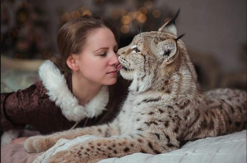 lynx as a pet