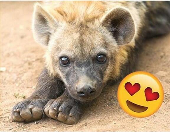 puppy hyena