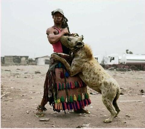 spotted hyena pet