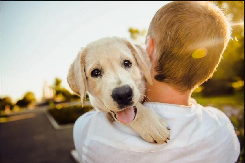 most loyal animals to humans most loyal animal in the world to humans most faithful animal loyal pet faithful animal loyal animals
