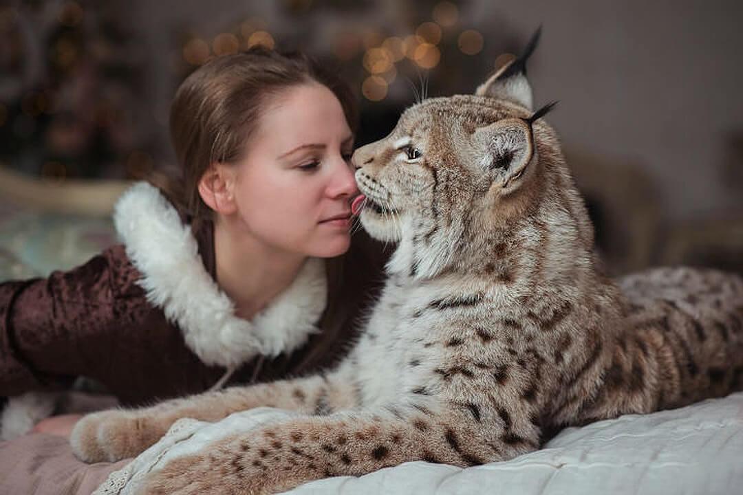 wild cat domesticated breeds