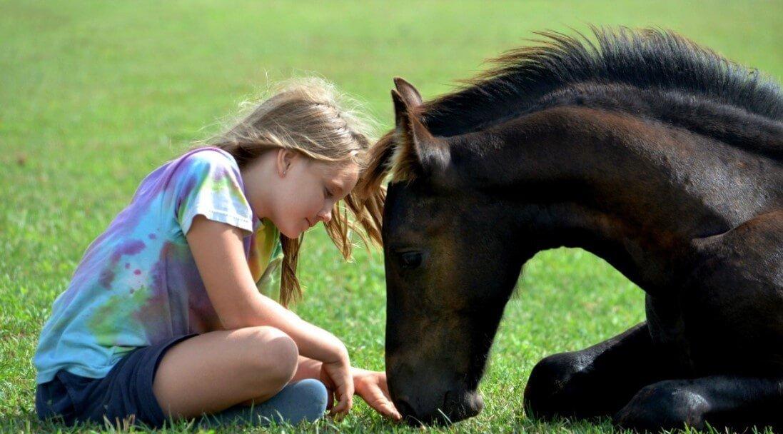 Most loving Animals To Humans loyal animals