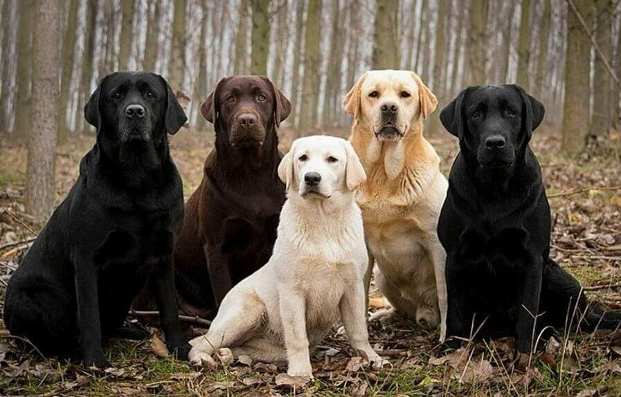 top 10 loyal dogs; best dogs for loyalty; top 10 most loyal dogs; top loyal dogs; best loyal dog breed;