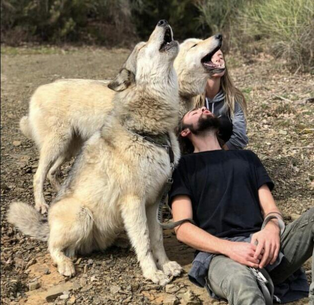 Wolves Loyalty Wolves Loyalty To Human
