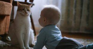 cats loyalty