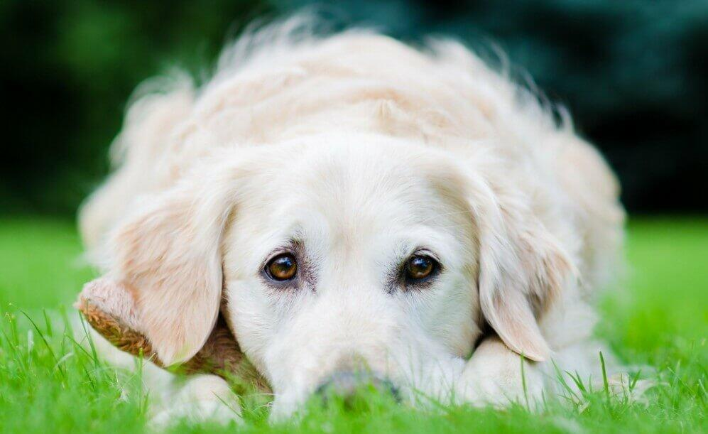 dog breath per minute