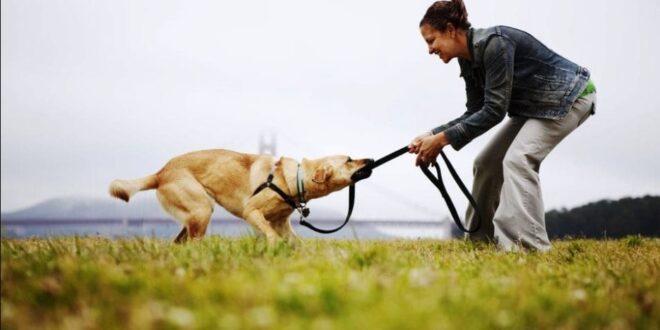 most loyal pets