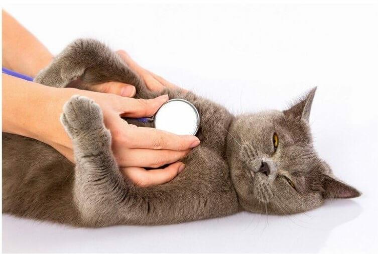 cat's breath per minute