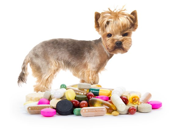 how to give a dog a capsule; worming tablets; flea pill for dogs; heartworm medicine for dogs; capstar for dogs; flea tablets for dogs; bravecto tablet; chewable flea and tick for dogs; flea and tick pill; calming tablets for dogs; flea and tick pill for dogs;