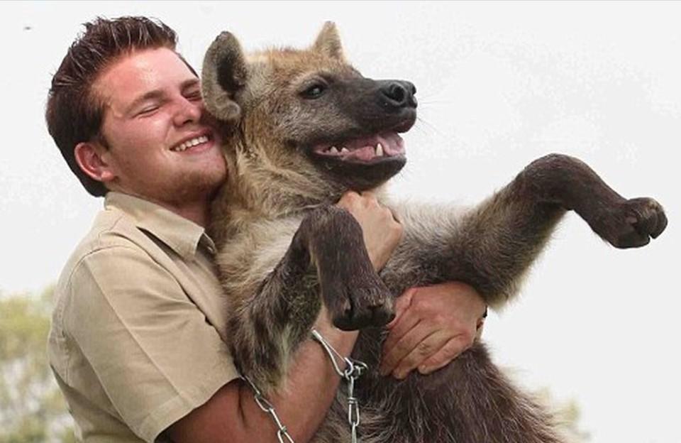 hyenas as pets