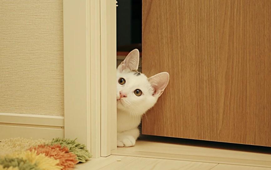 cat and door